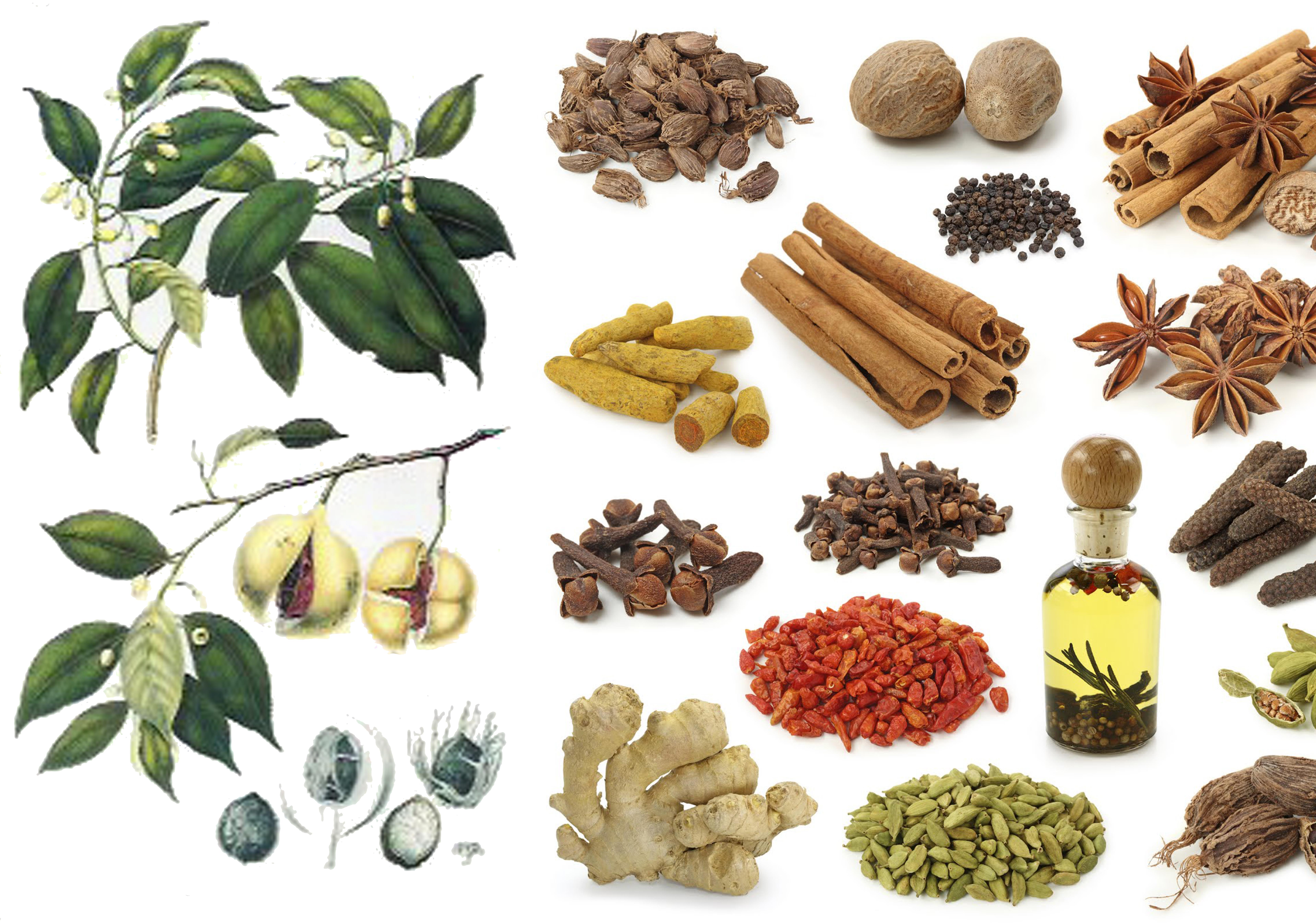 Especias filipinas entre el gale n de manila y el sol - Productos de la india ...